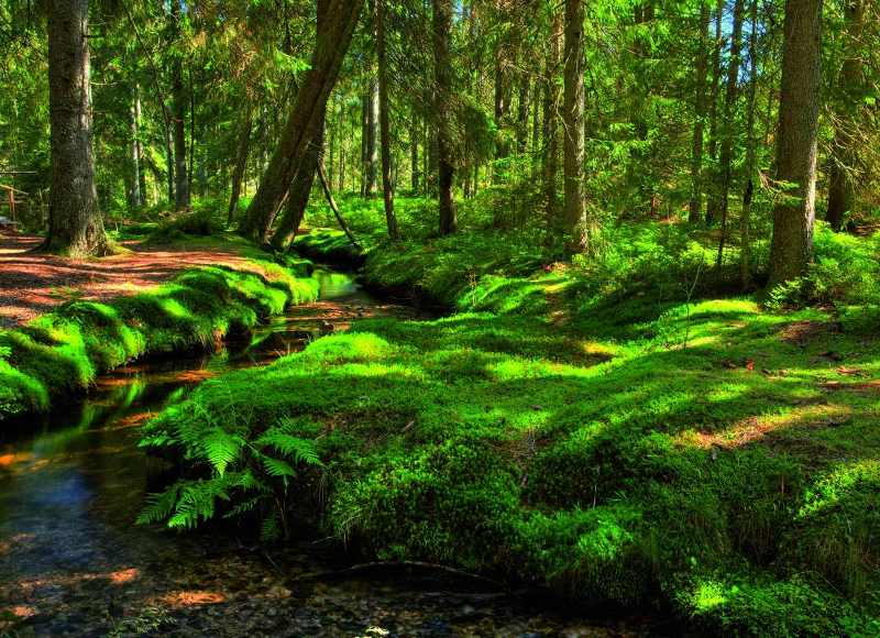 Black-Forest-Schwarzwald-Germany-2